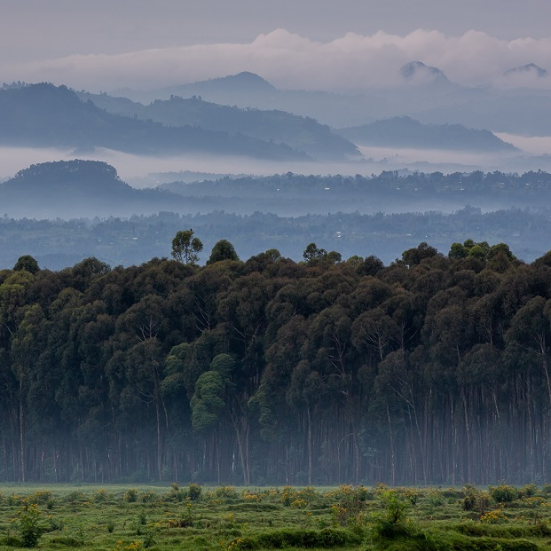 Singita Safari Lodges & Reserves