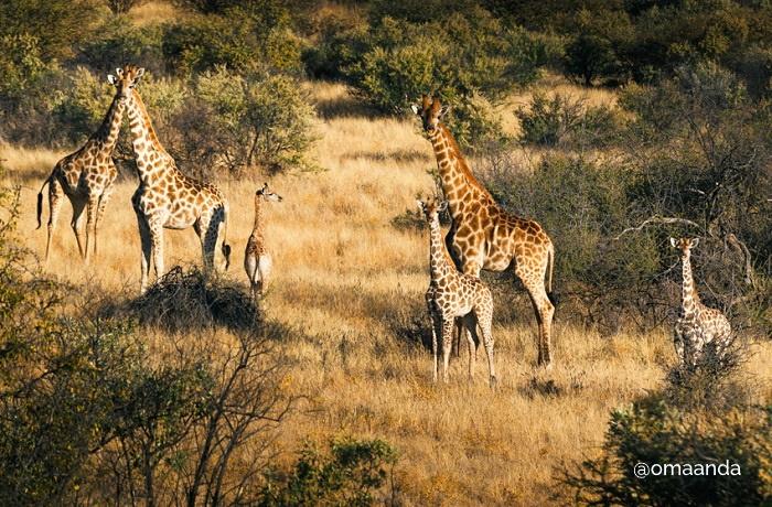 Zannier Hotels Omaanda Lodge Wildlife