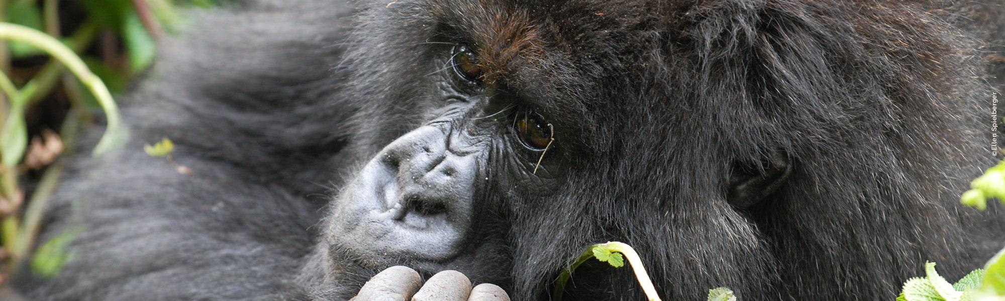 Ruanda Reisen mit Gorilla-Trekking