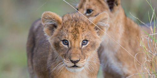 Luxusurlaub in Tansania - Safaris & Lodges